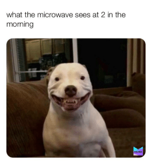 always watching...: what the microwave sees at 2 in the  morning  MEMES always watching...