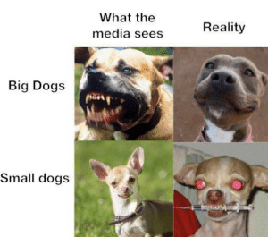 Chihuahuas are evil: What the  Reality  media sees  Big Dogs  Small dogs Chihuahuas are evil