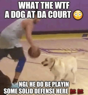 Bruh, Wtf, and Dog: WHAT THE WTF  A DOG AT DA COURT  NGL HE DO BE PLAYIN  SOME SOLID DEFENSE HERE damn bruh 💦💦💦🔞🔞🔞😤😤😤