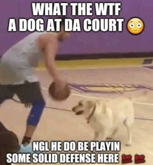 Omg, Wtf, and How: WHAT THE WTF  A DOG AT DA COURT  NGL HE DO BE PLAYIN  SOME SOLID DEFENSE HERE  D OMG (oh my gosh) How???!!!3!