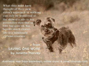 Journey, Memes, and Anxiety: What they must have  thought of their new  sister's approach to walking  can only be wondered at.  She showed a side to her  personality then that ast  time has gone on, has  become much clearer.  she is a fabulously  curious creature.  from  SAVING ONE MORE  by Janetta Harvey  Available now from bookshops, online stores & janettaharvey.com In our early months Twinkle was terrified of so much, it was painful to dwell on what she must have endured to become so far from a normal dog. But, amid all her problems and the overwhelming anxiety which plagued her days, she was always interested in everything when we were out on our walks. She moved into a totally new plane of awareness and behaviour.   Read more about the journey Twinkle has travelled in my second book, Saving One More.  #rescueschnauzer