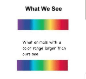 Ours: What We See  What animals with a  color range larger than  ours see