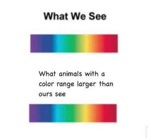 high iq meme here by xD_jAYDEn_lmFao MORE MEMES: What We See  What animals with a  color range larger than  ours see high iq meme here by xD_jAYDEn_lmFao MORE MEMES
