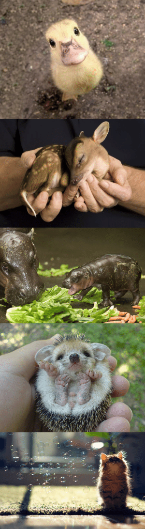 what would we do without baby animals: what would we do without baby animals