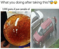 Memes, Vacuum, and 🤖: What you doing after taking this?  3,000 grams of pure cannabis oil Vacuuming the dishes. Wbu? 🤔 - - 🍇 Follow me @whatchills for more posts 🍇 - - meme lol memes dank dankmeme funny followforfollow comedy funnypostsdaily likeforlike humor spamforspam chill haha funnyvideos tagafriend funnypictures hilarious follow4follow follow4follow funnypost like4like tagyourfriends spam4spam lmao laugh bruh omg dead l4l f4f