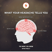 Food, Memes, and The More You Know: WHAT YOUR HEADACHE TELLS YOU  DRINK WATER/EAT FOOD  MORE SLEEP  REDUCE STRESS  THE MORE YOU KNOW  @FACT BOLT Just looked up my headache symptoms on WebMD, I have brain cancer... not