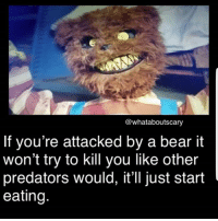 Yum yum -fer . . . horror spooky creepy scary creepyenemies haunted haunting terror bear blood gore paranormal predator: @whataboutscary  If you're attacked by a bear it  won't try to kill you like other  predators would, it'll just start  eating Yum yum -fer . . . horror spooky creepy scary creepyenemies haunted haunting terror bear blood gore paranormal predator