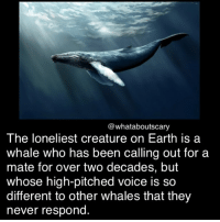 Memes, Earth, and Voice: @whataboutscary  The loneliest creature on Earth is a  whale who has been calling out for a  mate for over two decades, but  whose high-pitched voice is so  different to other whales that they  never respond Naaaaahw ~Noa