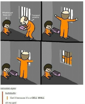 Whatcha: Whatcha got  there Jim?  Transport  proteins  buttsbutts  |Get it because it's a CELL WALL  oh my goo