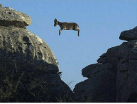 Whatever floats your goat: Whatever floats your goat