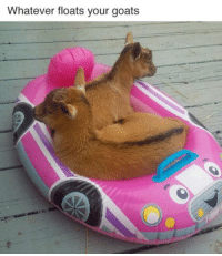 Float Your Goat: Whatever floats your goats