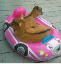 whatever floats your goats: whatever floats your goats