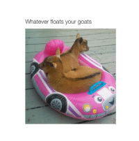 buy me a goat ˘◡˘: Whatever floats your goats buy me a goat ˘◡˘