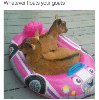 My goats don't float | More 👉 @miinute: Whatever floats your goats My goats don't float | More 👉 @miinute
