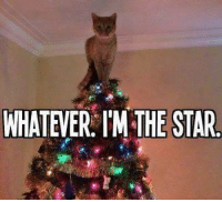 Cats, Memes, and 🤖: WHATEVER IM THE STAR Hiro broke the first ornament of the season this evening. Cats... - Death of the Endless