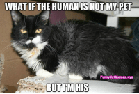 From Funny Cat Memes: WHATIF THE HUMAN ISNOTMY PET  Funny CatMemes.xyz  BUT IM HIS From Funny Cat Memes