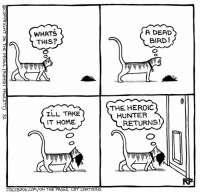 Facebook, Memes, and Brave: WHATS  A DEAD  BIRD !  UIS  THE HEROIC  ILL TAKE  HUNTER  IT HOME  RETURNS !  ーーー  RF  FACEBOOK:COM/ON THE PROWL CAT CARTOONS  liv  IES+-  llll.  Ills  COPYRIGHT ON THE PROWL (RUPERT FAWCETT) 32 The Brave Hunter... #Cats #Ontheprowl #Rupertfawcett