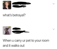 Memes, True, and Http: what's betrayal?  When u carry ur pet to your room  and it walks out It's so true via /r/memes http://bit.ly/2IvSWLh