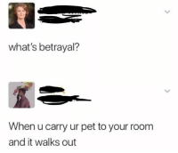 20 Best Funny Photos for Saturday Morning #memes: what's betrayal?  When u carry ur pet to your room  and it walks out 20 Best Funny Photos for Saturday Morning #memes