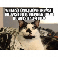 Food, Funny, and Memes: WHATS IT CALLED WHENACAT  MEOWS FOR FOOD WHEN THEIR  BOWLISHAL-FULL?  OKO Follow my backup @petroom for more animal memes