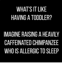 amt: WHAT'S IT LIKE  HAVING A TODDLER?  IMAGINE RAISING A HEAVILY  CAFFEINATED CHIMPANZEE  WHO IS ALLERGIC TO SLEEP  YEP  VZE  ANL  EE  EAS  KL  HP0  AMT  IT 0  GHC  NCG  TI A  SDR  IE  AG  HN  RA  WW N EI IS  W VI EN  ENA  GF  CW