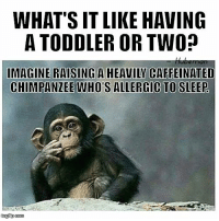 Memes, True, and Best: WHAT'S IT LIKE HAVING  A TODDLER OR TWO?  IMAGINE RAISING A HEAVILY CAFFEINATED  CHIMPANZEE WHO ALLERGIC TO SLEEP Best way I've heard it put... and sooo true!