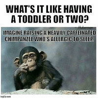 WHAT'S ITLIKE HAVING  A TODDLER OR TWO?  IMAGINE RAISING A HEAVILY CAFFEINATED  CHIMPANZEE WHO ALLERGIC TO SLEEP