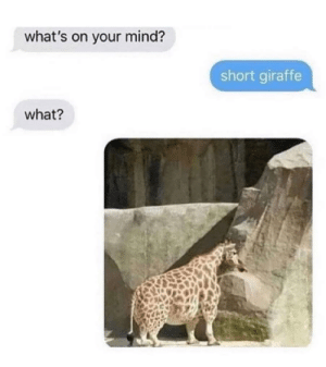 This is what I needed today: what's on your mind?  short giraffe  what? This is what I needed today