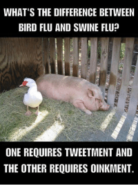 Flu Meme: WHAT'S THE DIFFERENCE BETWEEN  BIRD FLU AND SWINE FLU  ONE REQUIRES TWEETMENT AND  THE OTHER REQUIRES OINKMENT