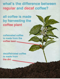 srsfunny:  How Decaf Coffee Is Actually Made: what's the difference between  regular and decaf coffee?  all coffee is made  by harvesting the  coffee plant  caffeinated coffee  is made from the  coffee bean  decaffeinated coffee  is made from  the dirt srsfunny:  How Decaf Coffee Is Actually Made