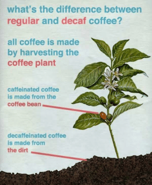 An oldie but a goodie: what's the difference between  regular and decaf coffee?  all coffee is made  by harvesting the  coffee plant  caffeinated coffee  is made from the  coffee bean  decaffeinated coffee  is made from  the dirt An oldie but a goodie