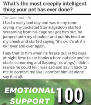 """https://t.co/xT14yVM6F3: What's the most creepily intelligent  thing your pet has ever done?  The-Goat-Lord 7h  I had a really bad day and was in my room  crying, my cockatiel Stormageddon started  screaming from his cage so I got him out, he  jumped onto my shoulder and put his head on  my cheek and started saying """"it's ok it's ok it's  ok"""" over and over again.  I say that to him when he freaks out in his cage  at night time (a car honks a horn outside and he  starts screaming and flapping his wings) I didn't  realise he could tell I was sad and say it back to  me to comfort me like I comfort him let alone  say it at all.  EMOTIONAL  100  SUPPORT https://t.co/xT14yVM6F3"""