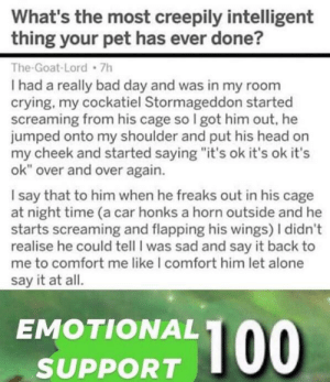 "Being Alone, Bad, and Bad Day: What's the most creepily intelligent  thing your pet has ever done?  The-Goat-Lord 7h  I had a really bad day and was in my room  crying, my cockatiel Stormageddon started  screaming from his cage so I got him out, he  jumped onto my shoulder and put his head on  my cheek and started saying ""it's ok it's ok it's  ok"" over and over again.  I say that to him when he freaks out in his cag  at night time (a car honks a horn outside and  starts screaming and flapping his wings) I didn't  realise he could tell I was sad and say it back  me to comfort me like I comfort him let alone  say it at all.  EMOTIONAL  100  SUPPORT  0o I wish I had a friend like this"