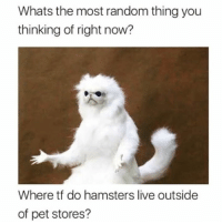 Live, Hood, and Random: Whats the most random thing you  thinking of right now?  Where tf do hamsters live outside  of pet stores? For real though.  🤔