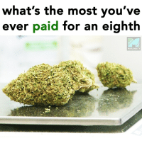 Whats the highest? @highAF.tv: what's the most you've  ever paid for an eighth  MARIJUANA TV Whats the highest? @highAF.tv