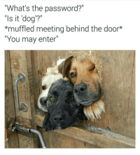 "Memes, 🤖, and Reign: ""What's the password?  ""Is it dog'?""  *muffled meeting behind the door  ""You may enter"" I'll guard their secrets with my life @chaos.reigns_ 👈 follow follow follow"