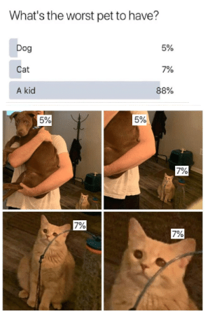 fuck kids, not literally.: What's the worst pet to have?  5%  Dog  Cat  7%  88%  A kid  5%  5%  7%  7%  7% fuck kids, not literally.