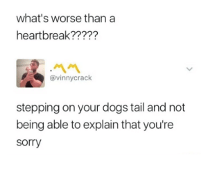 Dogs, Sorry, and Whats: what's worse than a  heartbreak?????  @vinnycrack  stepping on your dogs tail and not  being able to explain that you're  sorry