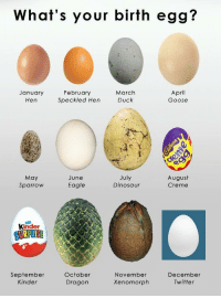 Dinosaur, Twitter, and Duck: What's your birth egg?  January  Hen  February  Speckled Hen  March  Duck  April  Goose  May  Sparrow  July  Dinosaur  August  Creme  June  Eagle  Kinder  October  September  Kinder  November  Xenomorph  December  Twitter  Dragon