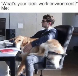"""Animals, Memes, and Work: """"What's your ideal work environment?""""  Me: Dog Memes Of The Day 32 Pics – Ep51 #animalmemes #dogmemes #memes - Lovely Animals World"""