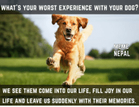 Dogs, Life, and Meme: WHAT'S YOUR WORST EXPERIENCE WITH YOUR DOG?  MEME  NEPAL  WE SEE THEM COME INTO OUR LIFE, FILL JOY IN OUR  LIFE AND LEAVE US SUDDENLY WITH THEIR MEMORIES. I mean what could be worst experience than losing your dog :'(  :'(