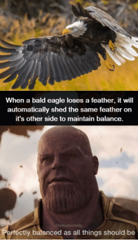 Eagle, Bald Eagle, and Will: When a bald eagle loses a feather, it will  automatically shed the same feather orn  it's other side to maintain balance.  ImVladimirPutin  ctly balanced as all things should be