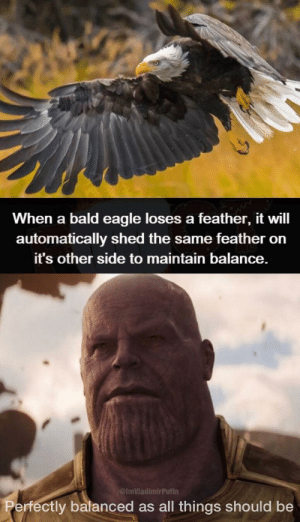 Dank, Memes, and Target: When a bald eagle loses a feather, it will  automatically shed the same feather orn  it's other side to maintain balance.  ImVladimirPutin  ctly balanced as all things should be Eagleually Balanced as all things should be. by ImVladimirPutin MORE MEMES