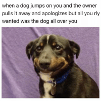 Memes, Kiss, and 🤖: when a dog jumps on you and the owner  pulls it away and apologizes but all you rly  wanted was the dog all over you This is why I swoop in and kiss the dog on the mouth while the owner is distracted NothingCanComeBetweenMeAndDoggo 😍😂😂😂