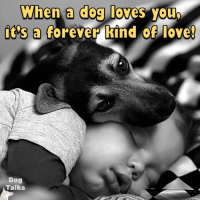 dog love: When a dog loves you  it's a forever kind of love!  Dog  Talks