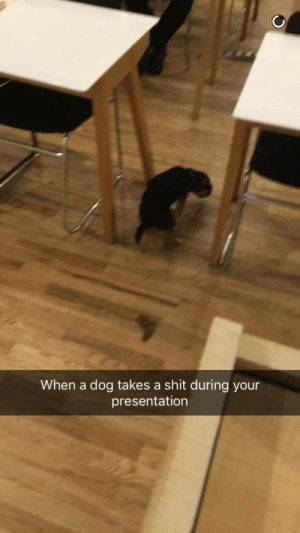 Funny, Shit, and Running: When a dog takes a shit during your  presentation My friend had this huge corporate training event that he was running at a startup in NYC and a dog shat during his presentation imma kms this is so funny 😂