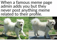 Famous Memes: When a  famous meme page  admin adds you but they  never post anything meme  related to their profile  Breed Info.com