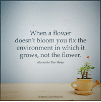 Facebook, Memes, and facebook.com: When a flower  doesn't bloom you fix the  environment in which it  grows, not the flower.  Alexander Den Heijer  facebook.com/PrinceEa The environment plays a big factor in how a person grows. Motivation Inspire Positive Greatness PrinceEa Gratefulness Liveinthemoment