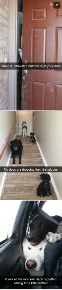 animalsnaps:Dog snaps: When a Jehovah's Witness is at your door   My dogs are dropping their first album   It was at this moment Hank regretted  asking for a little brother. animalsnaps:Dog snaps