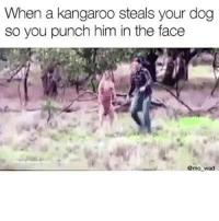 😂😂😂: When a kangaroo steals your dog  so you punch him in the face  @mo wad 😂😂😂
